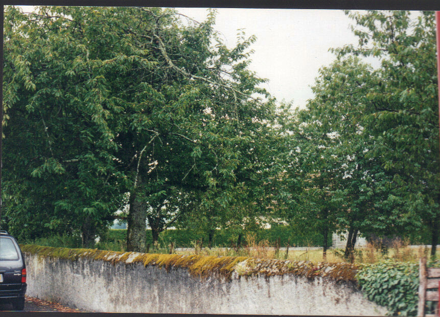 cerise sur le gâteau, les cerisiers du jardin Pasquine, en face de Hitte