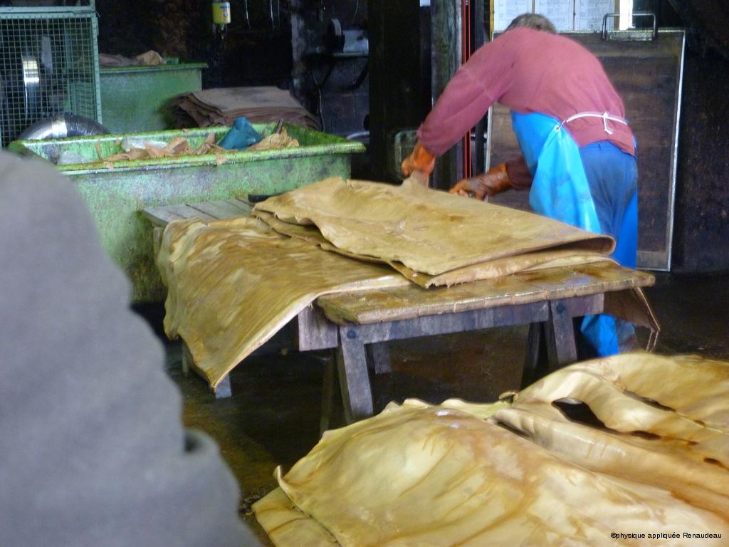 préparation des peaux au passage à l'écharneuse