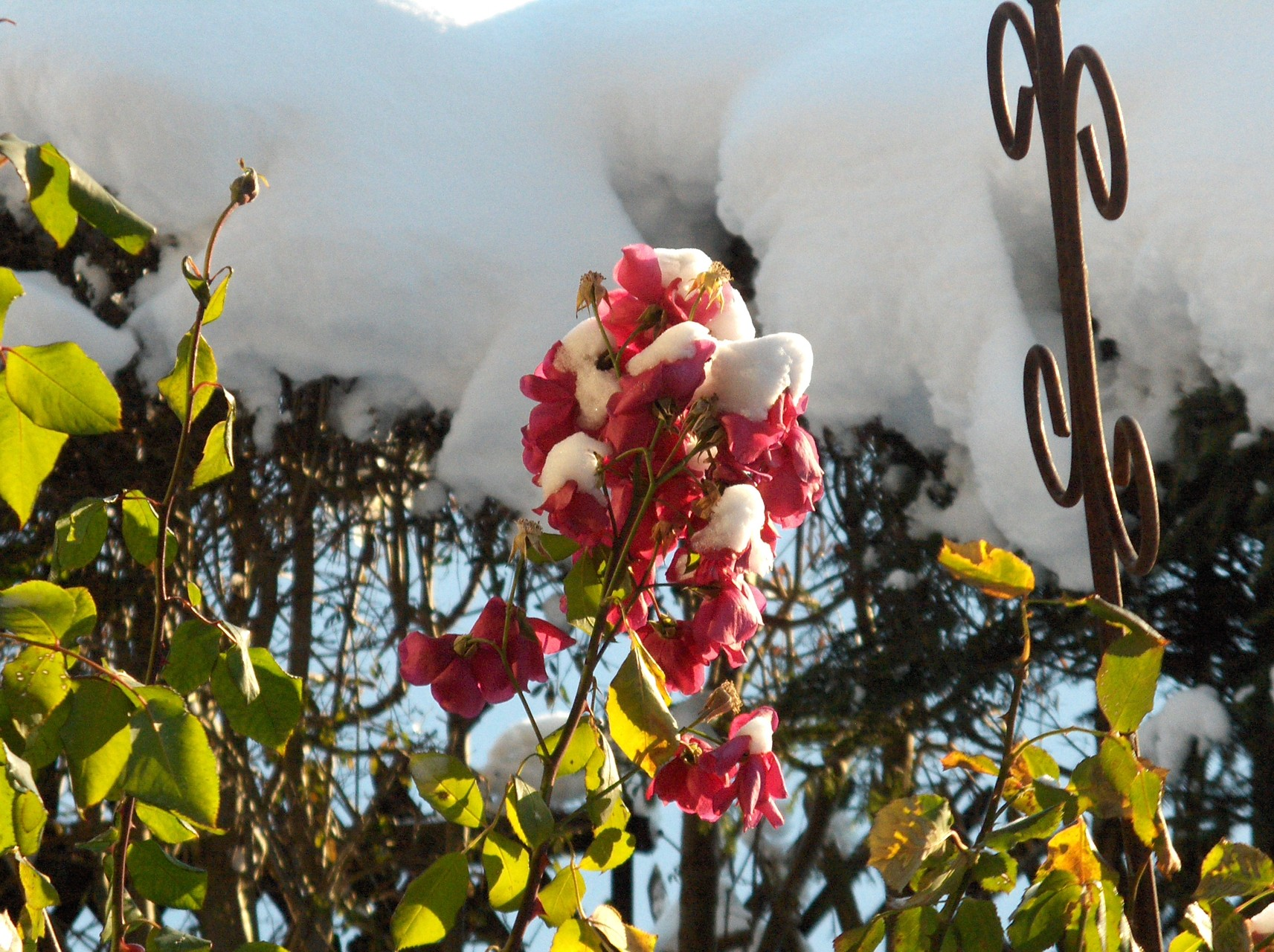 Erster Schnee im Herbst