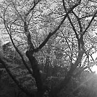 Contrast Sunshine  - Syn Nakamura