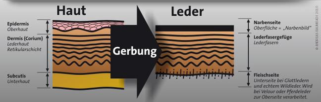 Schematischer Querschnitt durch Haut und Leder