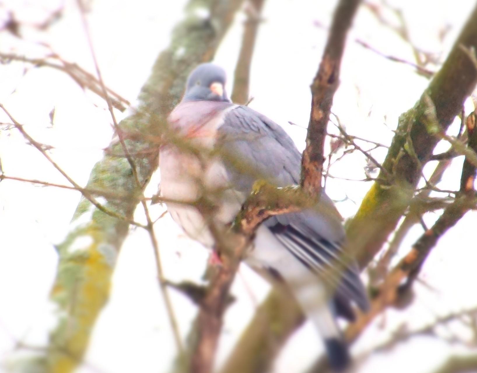 Taubes Flüstern