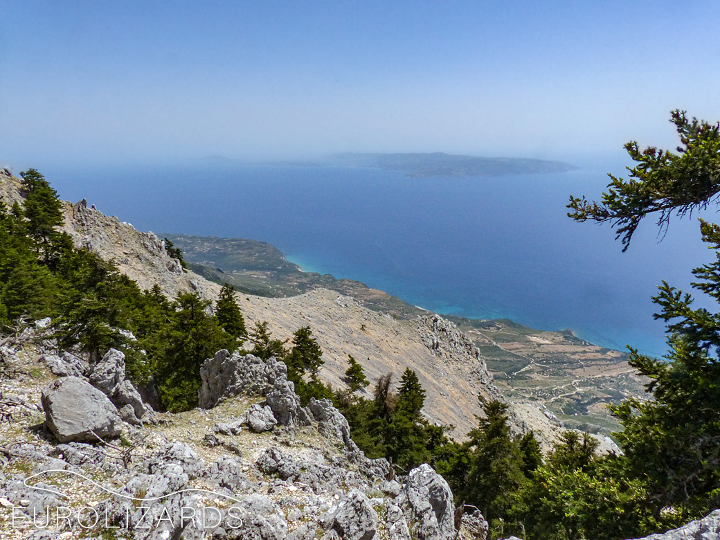 The peak area of Mount Enos (Kefalonia / GR) on 1600 m altitude: Terra typica of Algyroides nigropunctatus kephallithacius. The island in the background is Zakynthos.