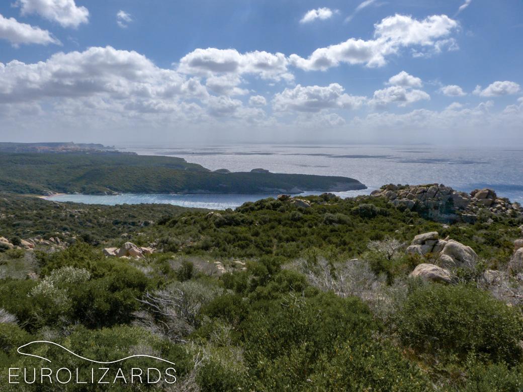 Coastal macchia in southern Corsica: Habitat of Algyroides fitzingeri, Podarcis tiliguerta and Archaeolacerta bedriagae