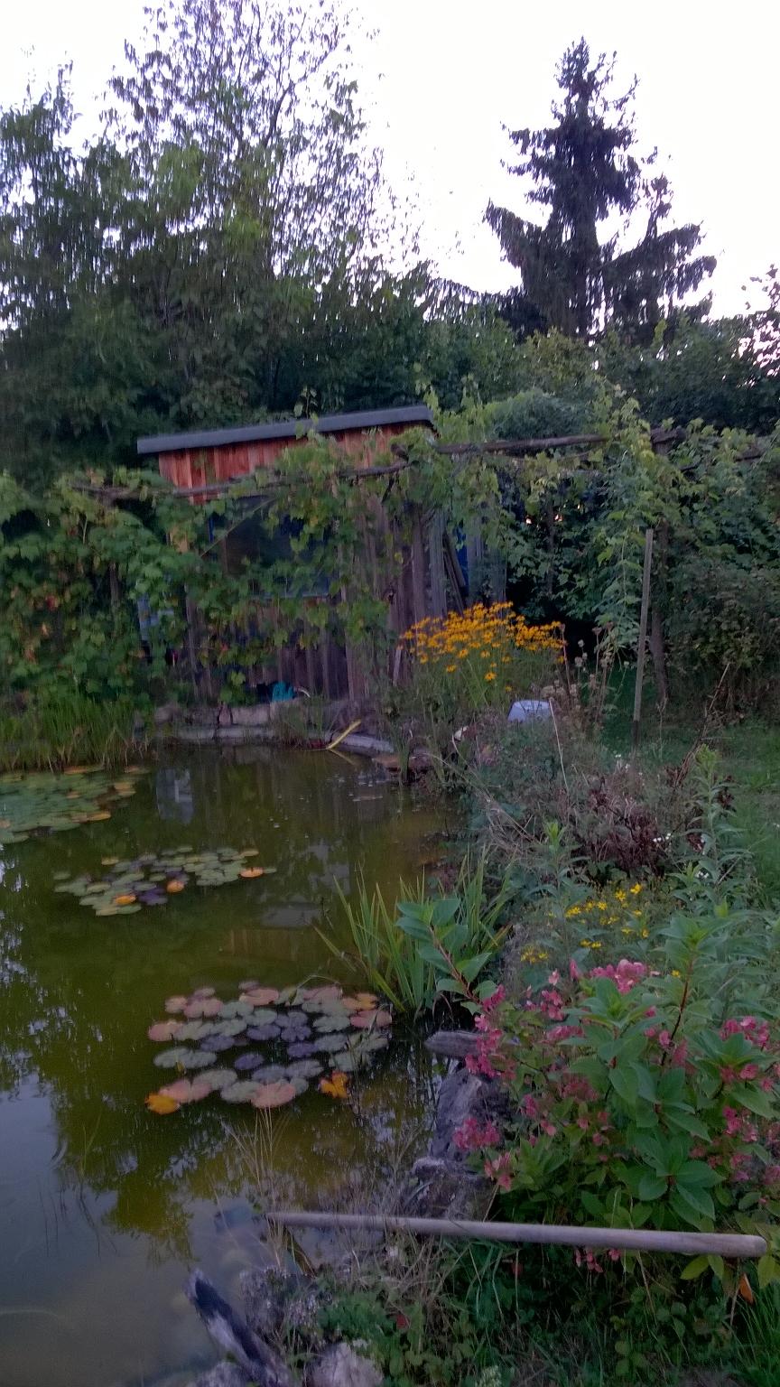 unserer oberer Garten/ our upper garden