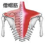 肩こり 寝違え 首の痛み 東京 整骨院 葛飾