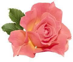 myRefan Parfümerie und Kosmetik - Rose Lieblingsduft