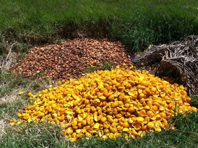 Manejo de residuos orgánicos de agroindustrias, Desamparados (2012)
