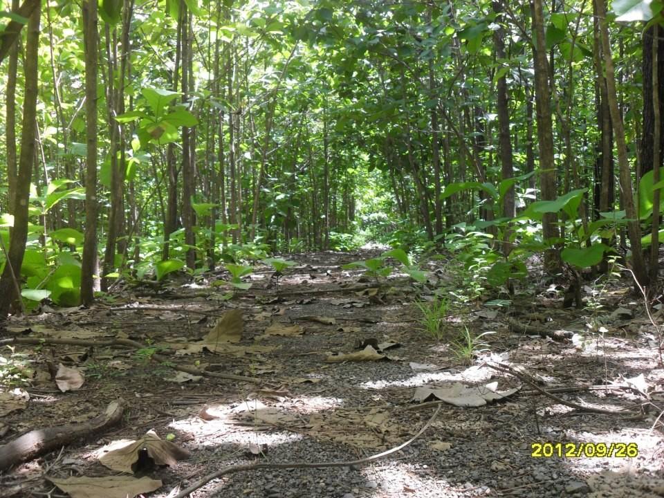 Evaluación Ambiental de futura planta gasificadora, Carrillo (2012)