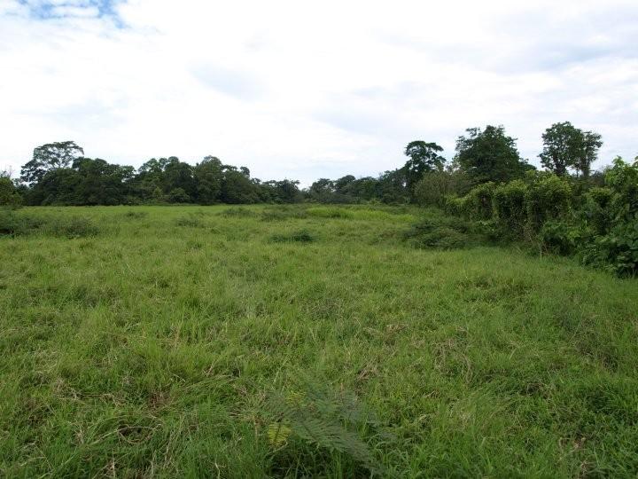 Evaluación ambiental de futura estación de autoconsumo, Horquetas (2009)