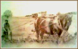 Homme tenant la charue derriere un cheval de trait