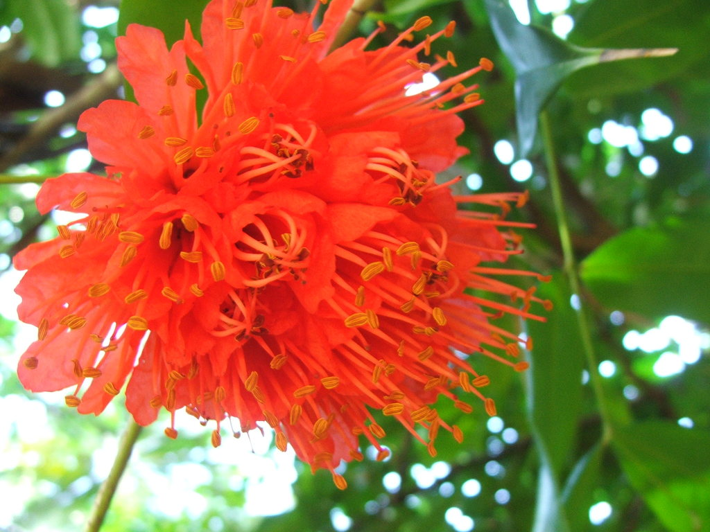 La Flore de l'Ile Maurice