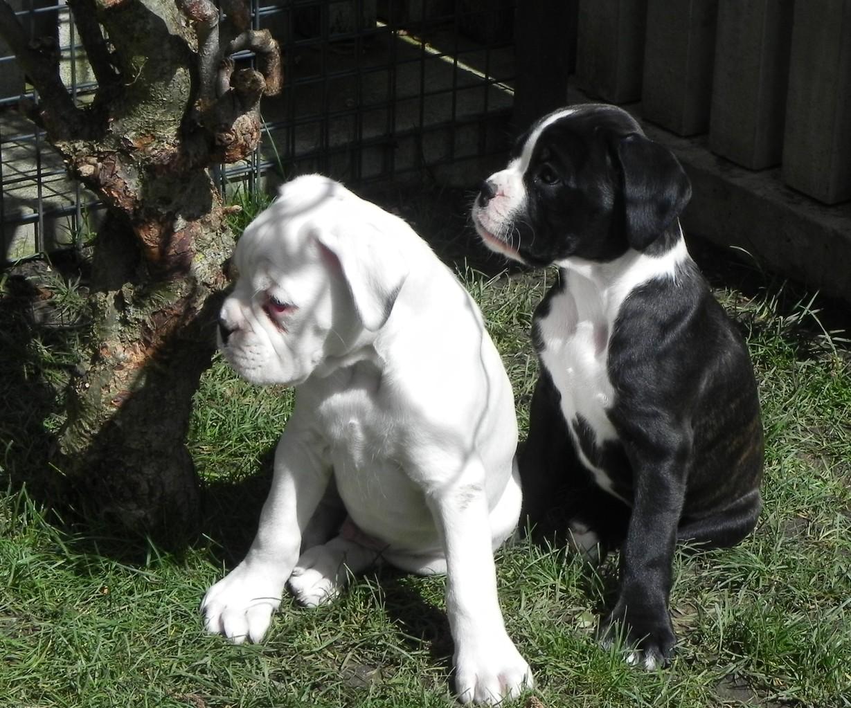 Cosmo und Clea….