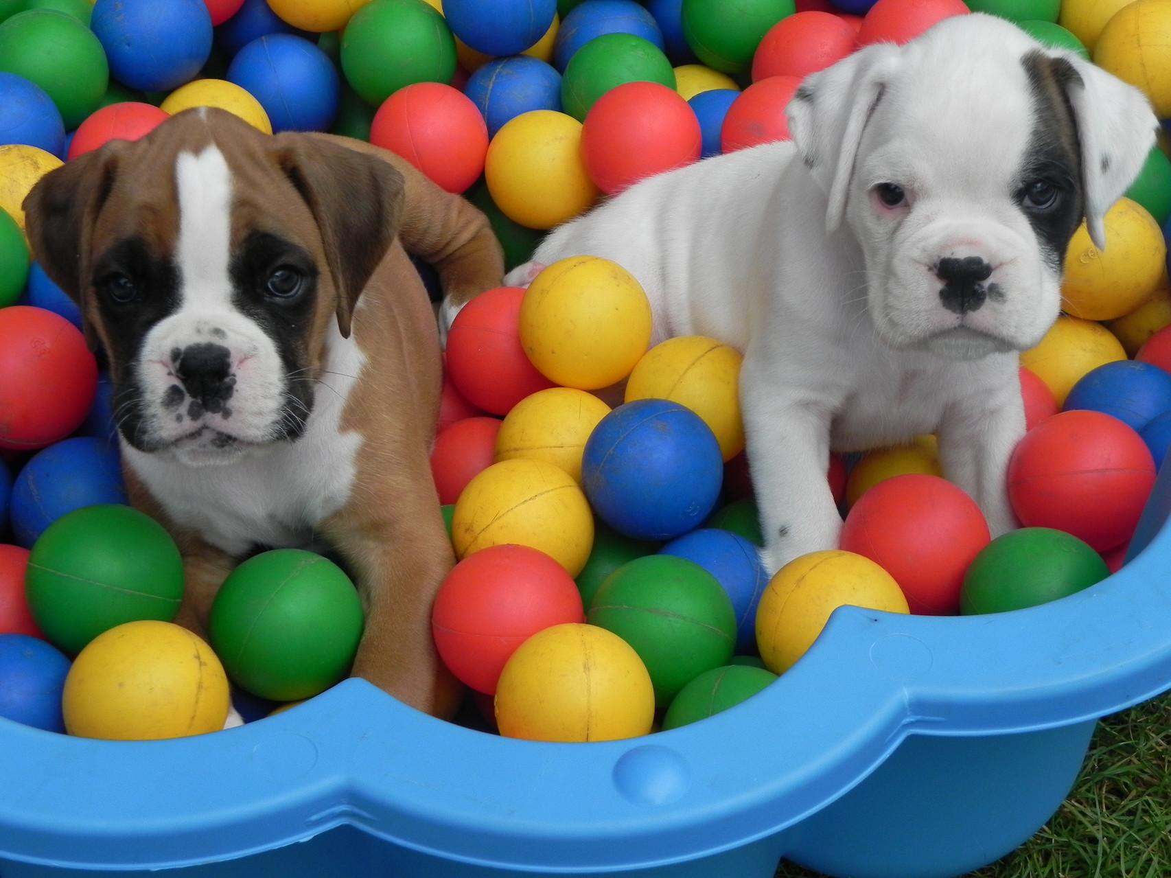 Danillo und Daisy im Chugelibad.....