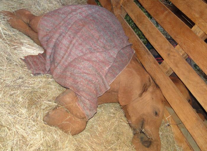 Sities liegt ganz nah bei Naipoki, die hinter dem Zaun schläft (12/2011).