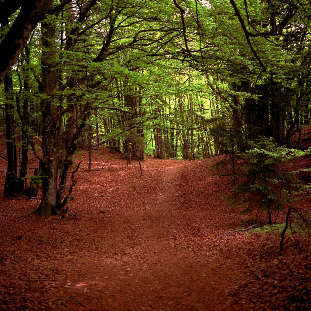 séjour promenade nature - détente et randonnée au coeur du massif vosgien