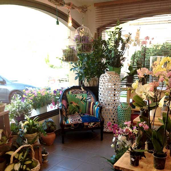 Intérieur, espace plantes