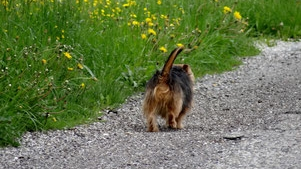 Hundekot auf Wiesen und Weiden