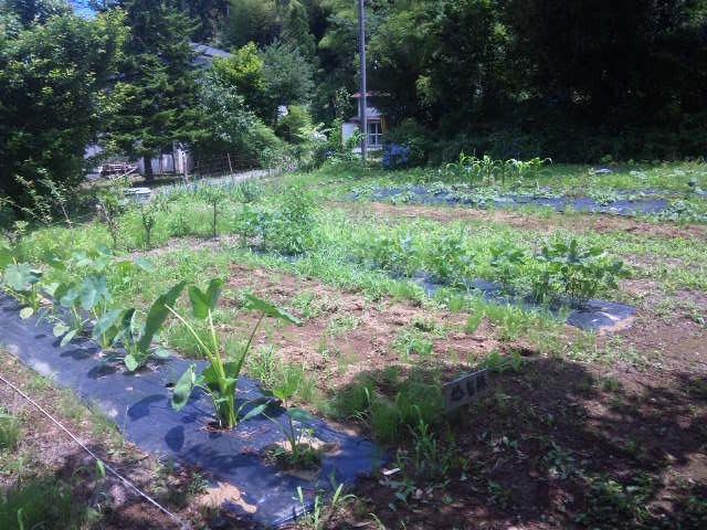 14.7.12撮影 O氏の畑(1週間に一度程度は作業に来られます。今は暑いので少し間が空いたようです。)