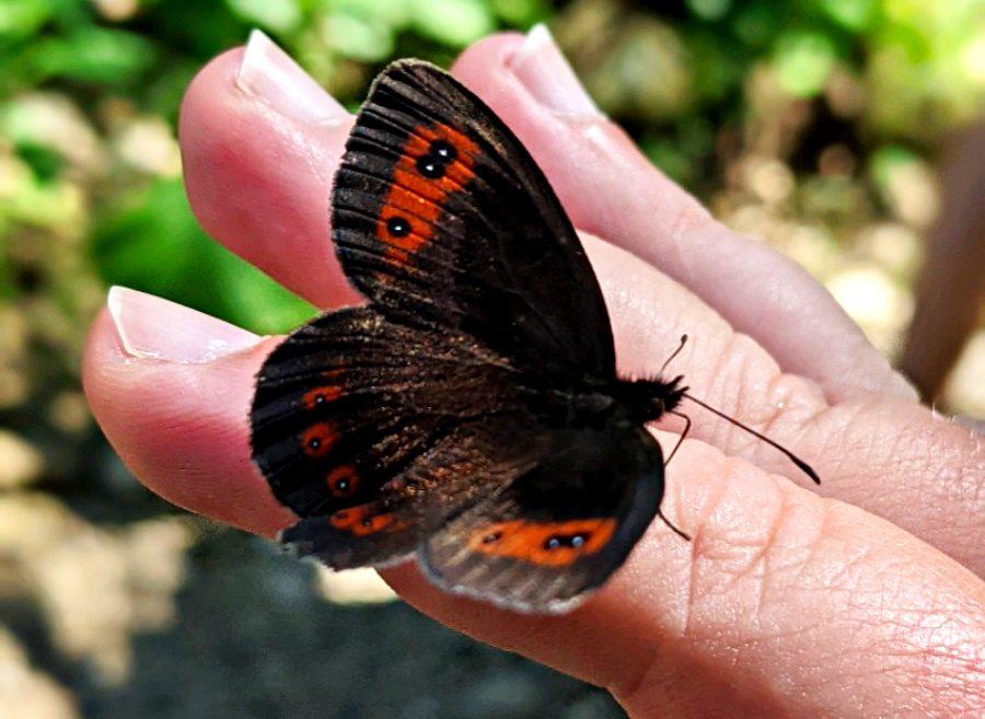 Folge dem Schmetterling