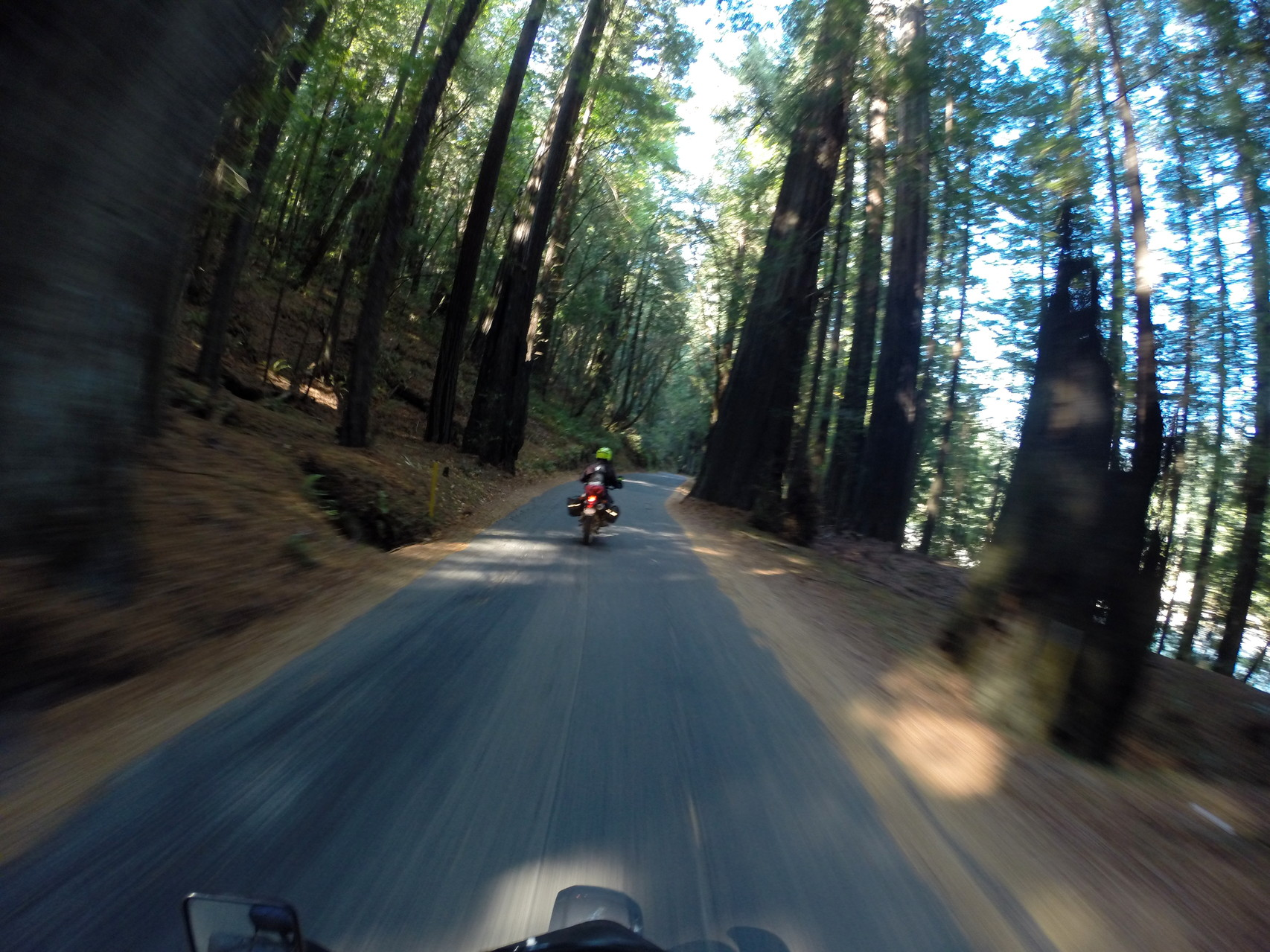 Met back up with the Avenue of the Giants north of Weott