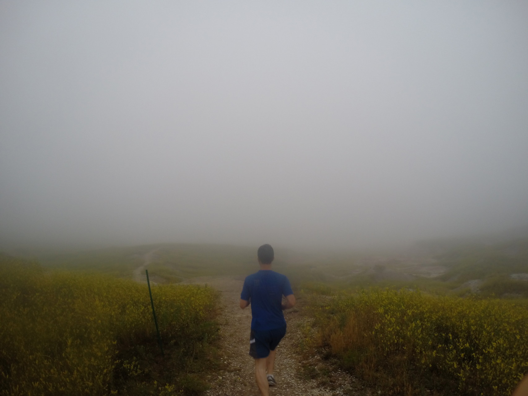 Foggy morning run in the national park