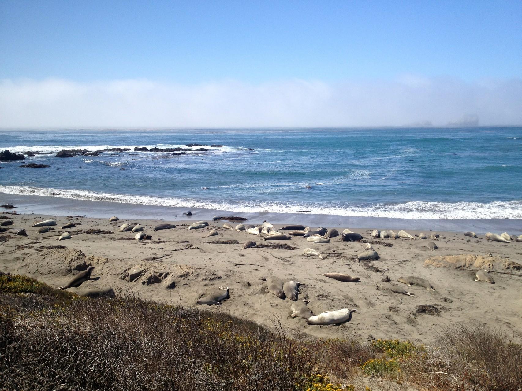 Elephant Seal Beach in San Simeon, CA