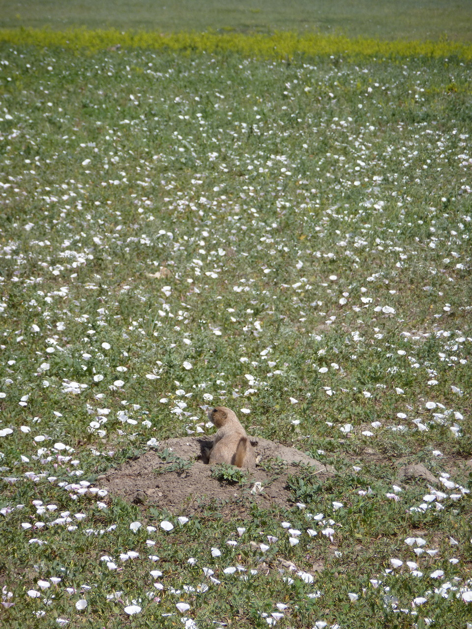 And the prairie dog?