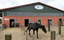Bild: Der Hof Wellenreiter mit Pferden vor den Pferdeboxen