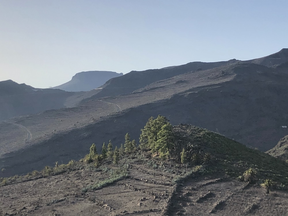 Wonderful little forest in the middle of stony desert in the South of La Gomera