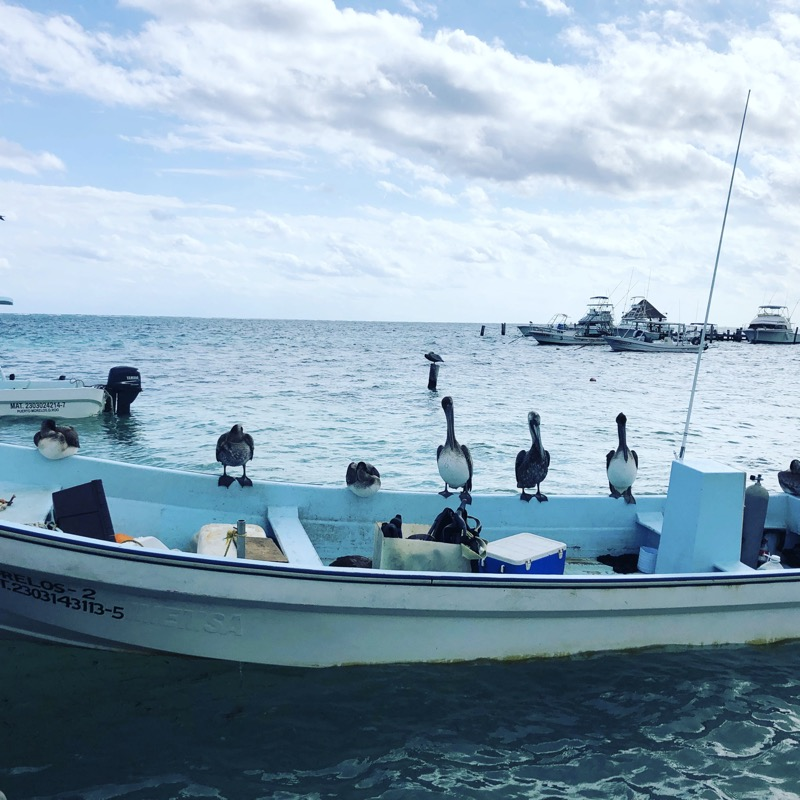 Pelikans on a boat at Puerto Morelos