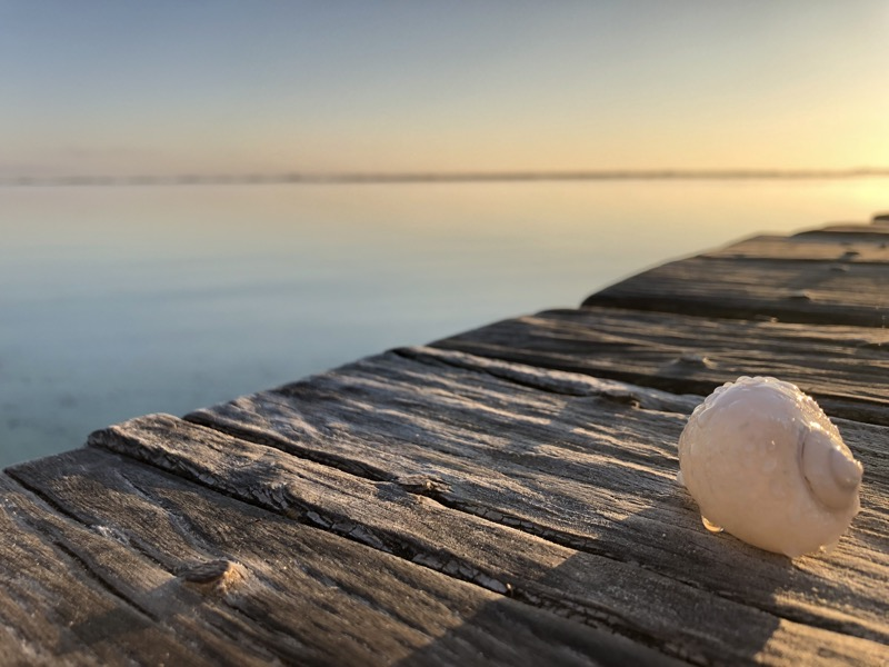 A lonely shell on the pier for sunrise, still wet from the morning mist