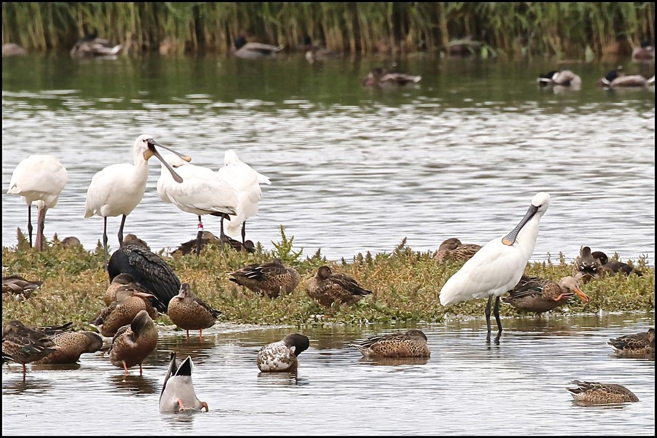 les oiseaux de la Baie