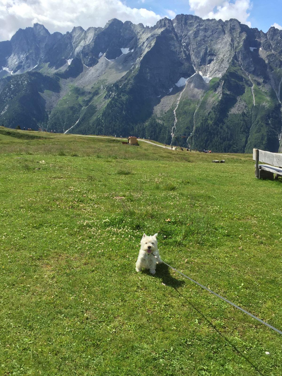 Urlaubsgrüße von Sammy aus Südtirol- Ausflug in den Alpen