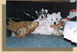 Holly und Roxi