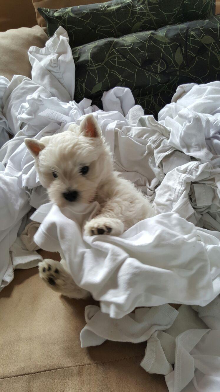 ...nun bei meinem neuen Herrchen und 'mal die Bügelwäsche sortieren
