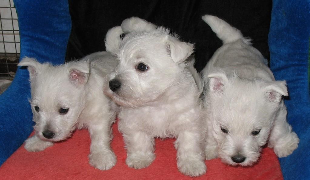 Kenny mit Geschwister