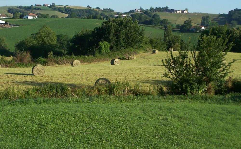 Autre vue de la pelouse