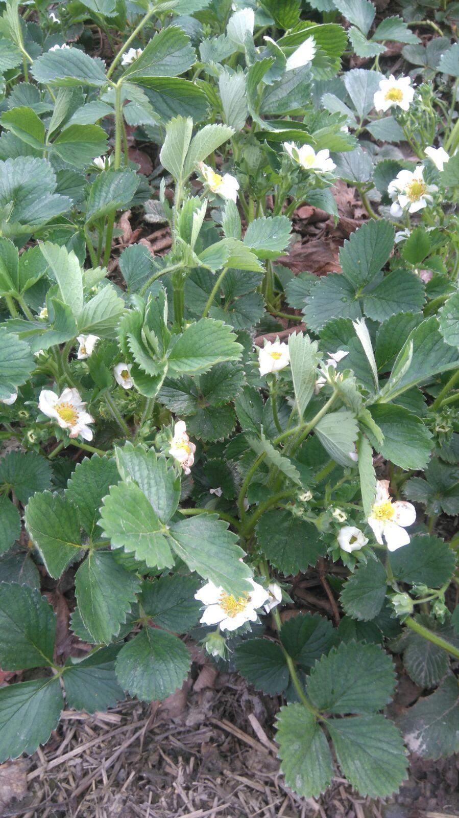 Ende März: Blütezeit