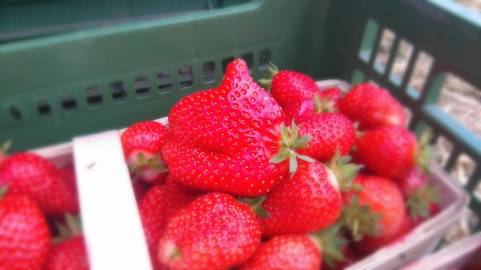 Daumen hoch für unsere Erdbeeren