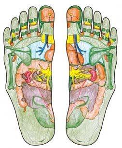 Darstellung der unterschiedlichen Reflexzonen der Füße