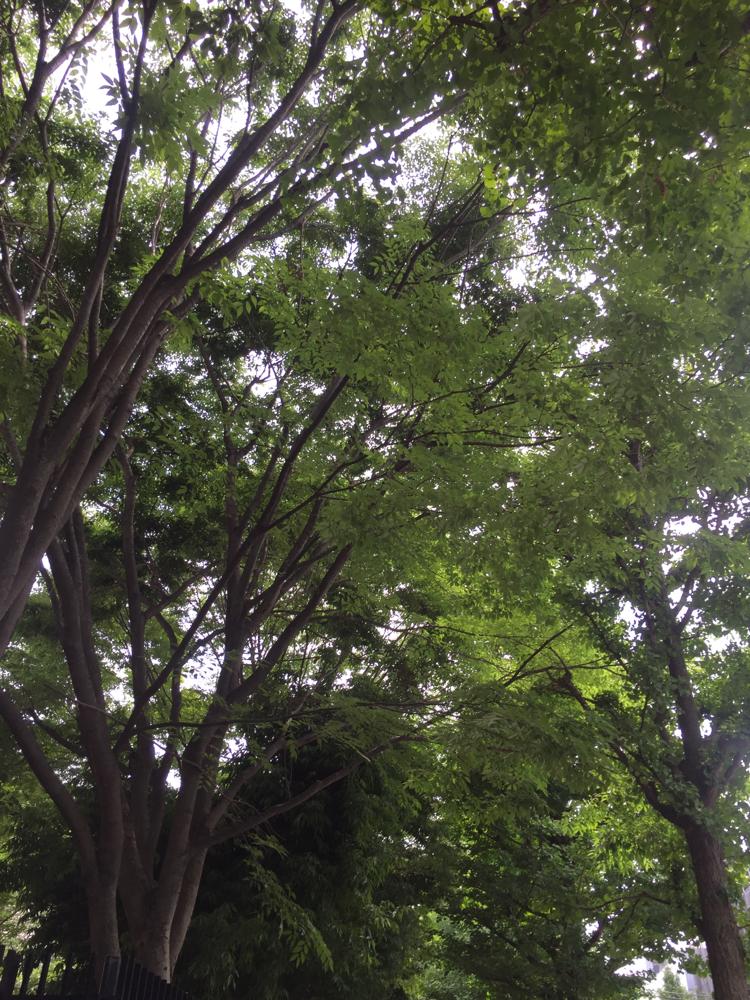 代々木のみどり