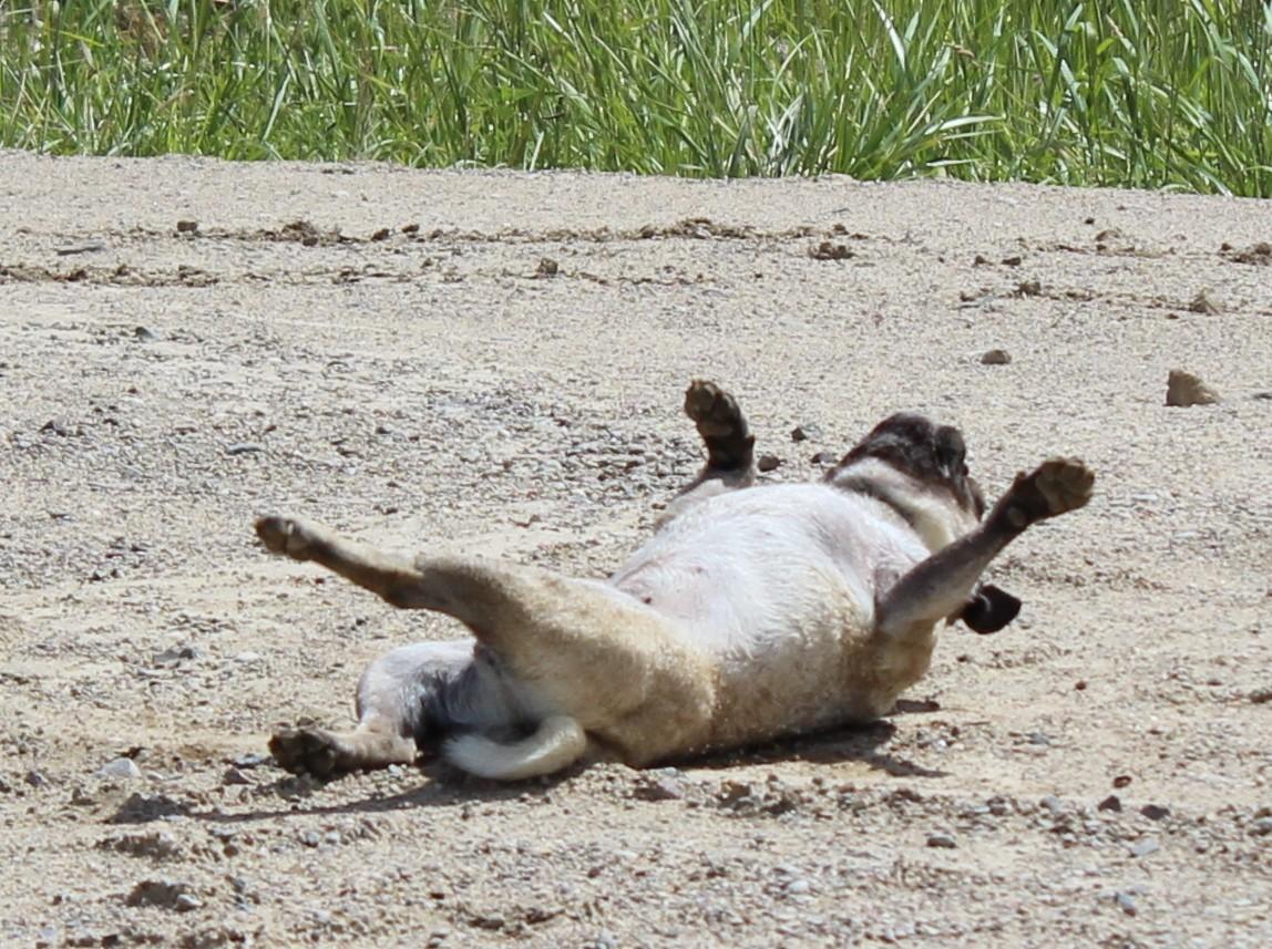 ...herrlich, nach dem Baden schön im Sand wälzen...