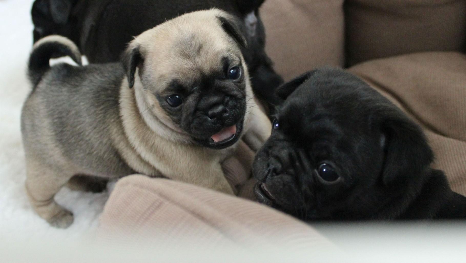 Und schon wieder Bonita und Bruno...