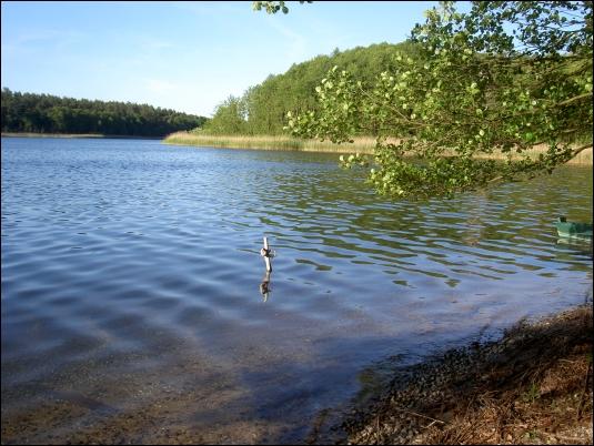 Großdöllner See, am Anglerplatz. Dort liegen mehrere Boote an. Der Uferpfad (kein markierter Wanderweg) führt direkt daran vorbei. - Parken ist möglich oberhalb an der Schotterstraße, die von Döllner Heide bis nach Friedrichswalde führt.