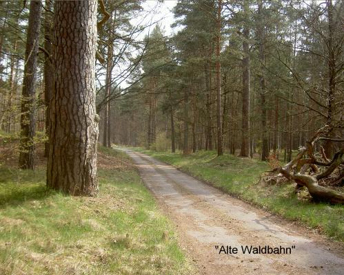 Viele km Asphaltstrecke mitten im einsamen Wald, nur zum Radeln und Wandern  (beginnt nah bei Carinhall, endet gut 1 km vor Michen (Werbellinsee).