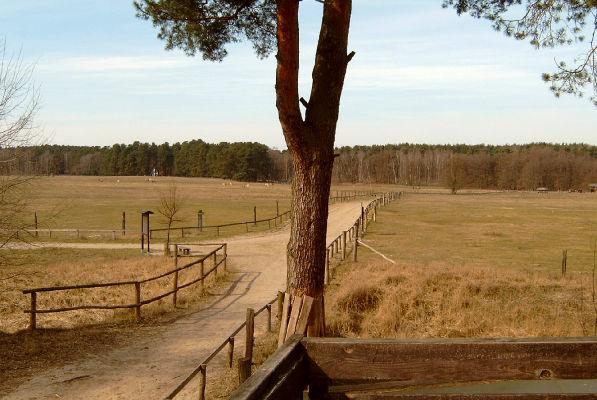 Das weitläufige Wildpark-Gelände. - Vorn: Aussichtsplattform nah beim Wolfsgehege