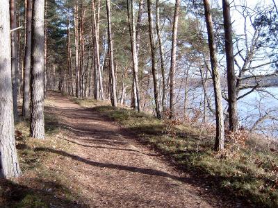 Uferpfad am Großdöllner See - Nordseite. Freier See-Blick nur im Winter und zeitigen Frühjahr, sonst nur an einzelnen Stellen.