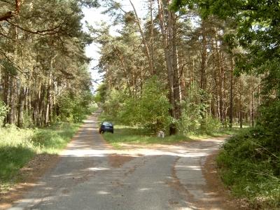 Abzweig auf eine lange Waldroute für Radler von Groß Schönebeck nach Rosenbeck bzw. Eichhorst. - Beschildert. An der Ecke liegt ein Wegweiser-Stein. Bis zum Abzweig handelt es sich um eine öffentliche Straße (Richtung Klandorf).