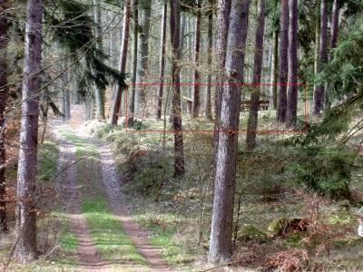 Hubertusstock-Rundweg, ebenfalls nah beim Rastplatz (rot markiert), aber aus der anderen Richtung geschaut. Einige Fichten stehen am Rand, sonst herrschen Kiefern und Eichen vor.